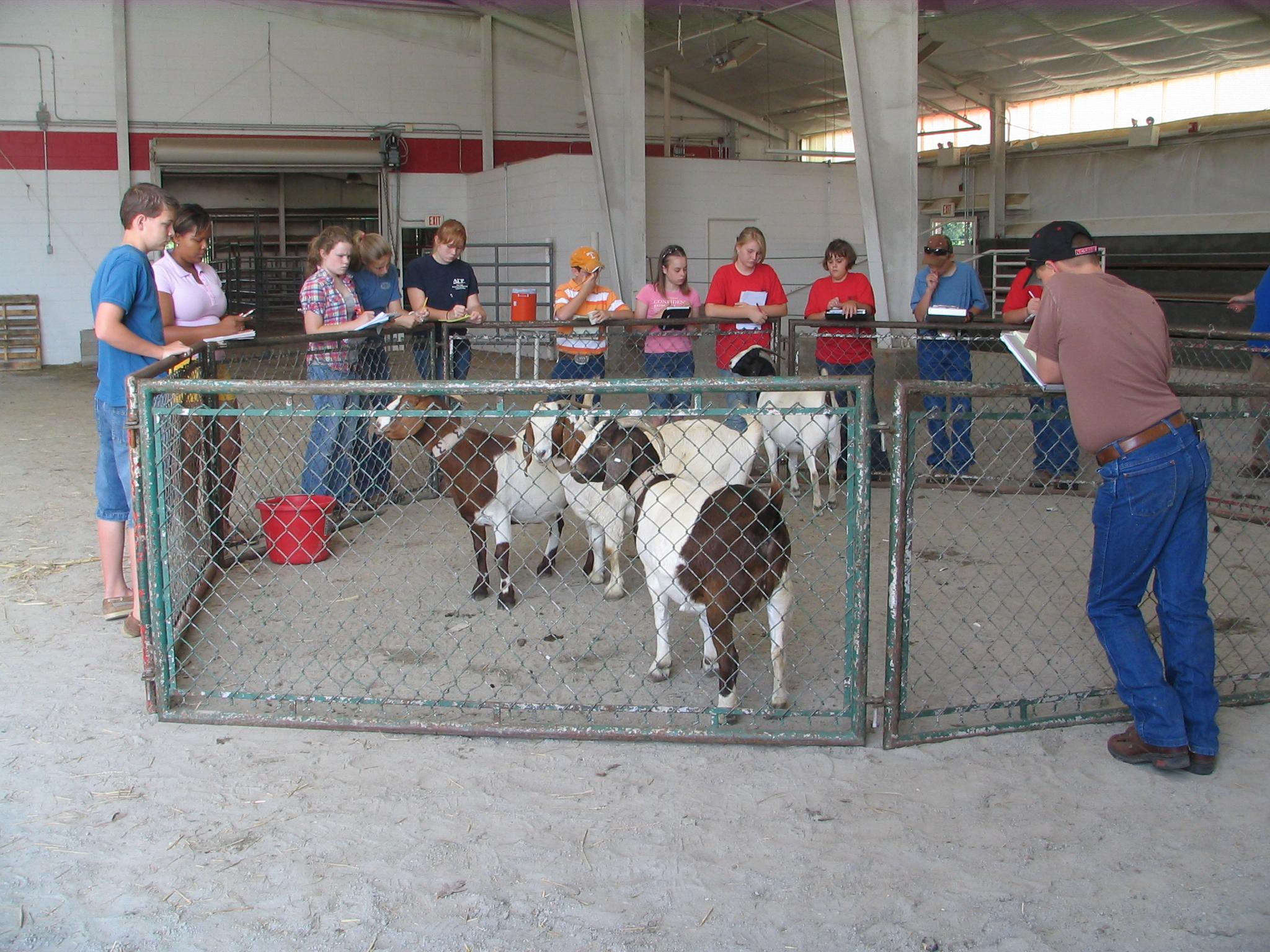 Livestock in pen
