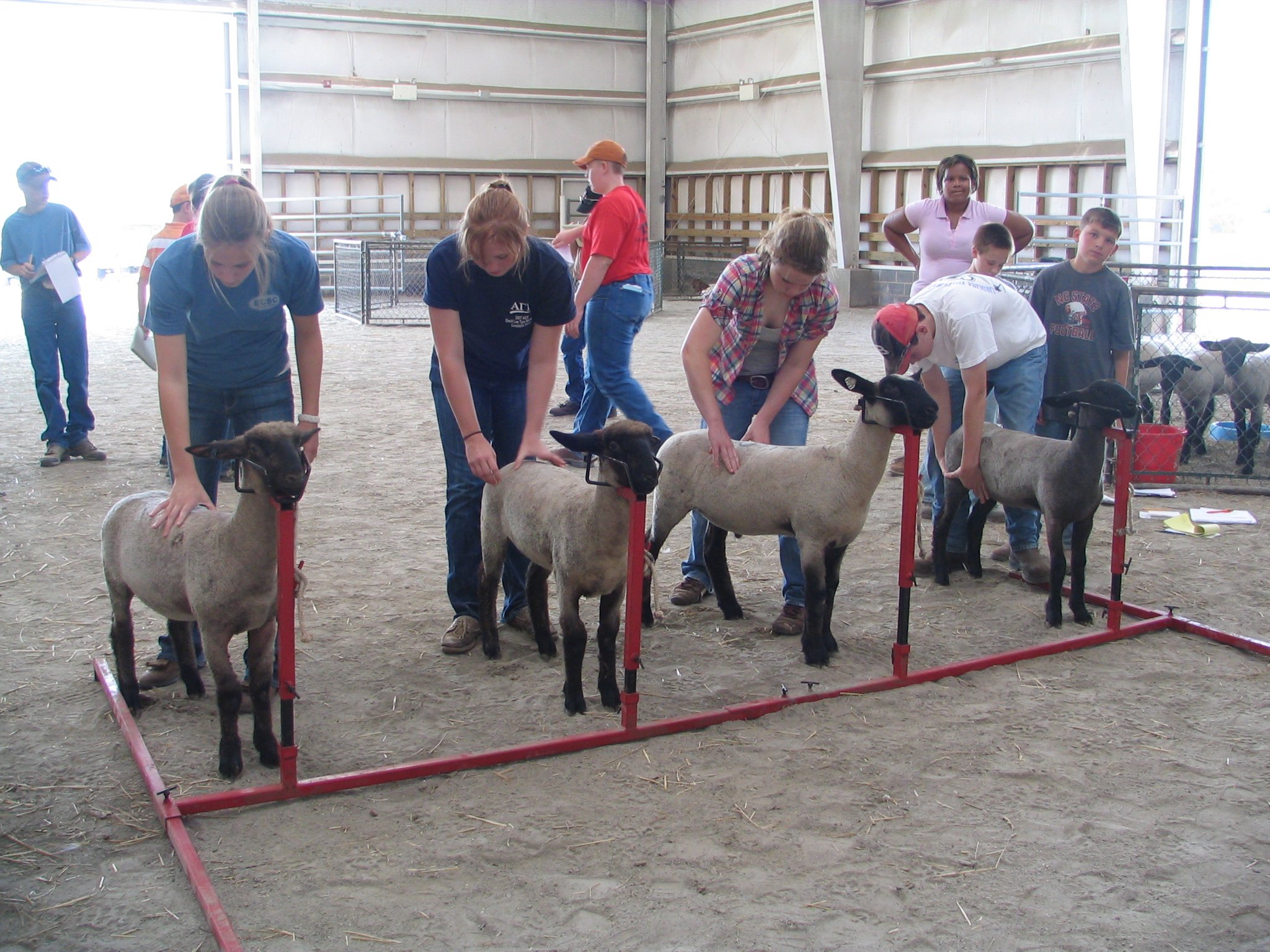 Image of livestock competition