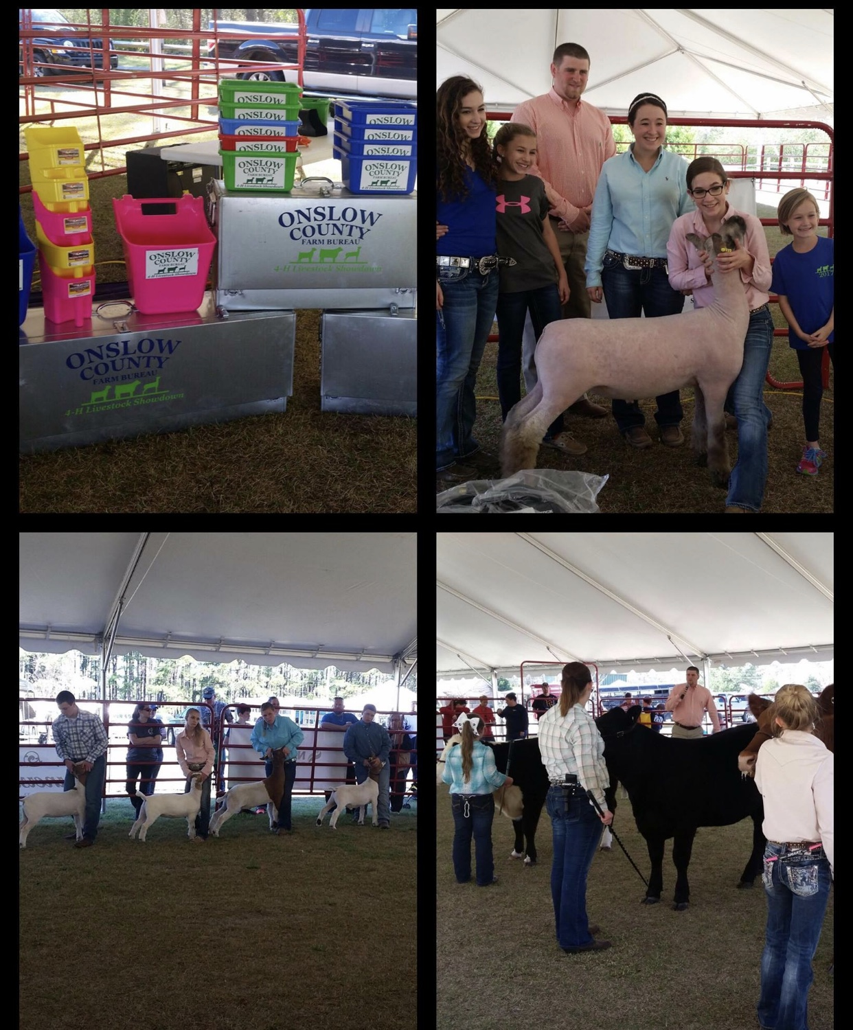 Image collage of livestock show