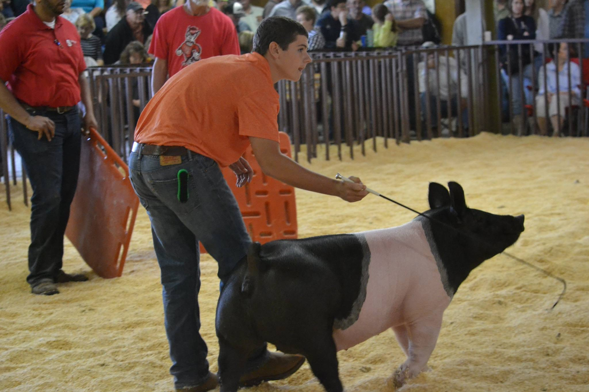 youth showing a pig